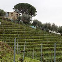 Le Vigne del Grillo: Camaiore e i vini dei propri monti ad Enolia 2020!